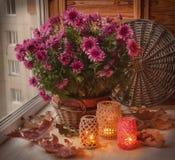Lampes-torches et buisson de chrysanthèmes dans la fenêtre Photographie stock libre de droits