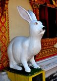 Lamphun, Thailand: White Rabbit Statue at Temple Stock Photos