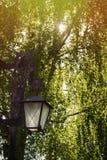 Lampion błyszczy w parku obrazy royalty free