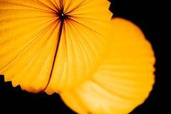 Lampion chinois Photos libres de droits