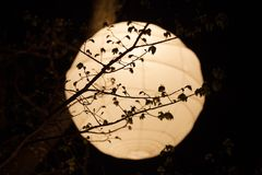 Lampion de riz Image stock