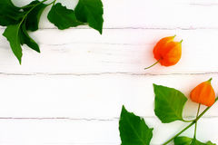 Lampion flower on white. Wood background royalty free stock photo