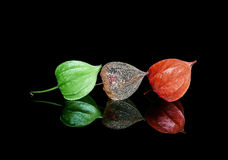 Lampion Fruits in three growth stages Royalty Free Stock Photos