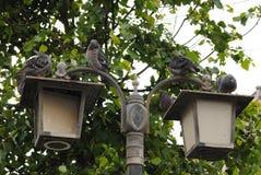 Lampion i gołębie Zdjęcia Royalty Free