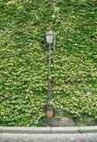 Lampion Paris w zieleni ściany tle Obraz Stock