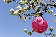 Lampion rose Images libres de droits