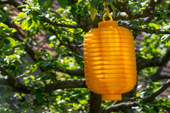 Lampion in a sunny tree Royalty Free Stock Photos