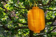 Lampion in a sunny tree Royalty Free Stock Photos