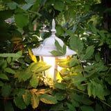 Lampion łuna Obrazy Royalty Free