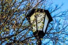 Lampion w parku fotografia royalty free
