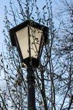 Lampion w parku obrazy royalty free