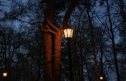 Lampion w parku obraz royalty free
