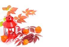 Lampion, winogradów liście i lampiony na bielu, Obrazy Royalty Free