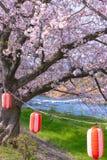 Lampion z Czereśniowymi okwitnięciami, Tokio, Japonia fotografia stock
