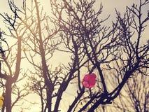 Lampions colorés dans un arbre Image libre de droits