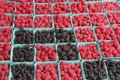 Lampone e pinte di Blackberry Fotografie Stock