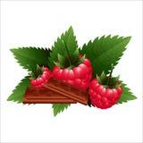 Lampone fresco con cioccolato e la menta Fotografia Stock Libera da Diritti