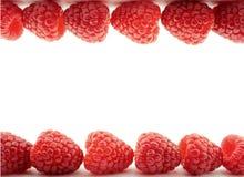 Lampone rosso Fotografia Stock Libera da Diritti