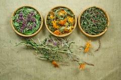 Lampone secco Medicina di erbe, erbe medicinali di fitoterapia Immagine Stock Libera da Diritti