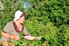 Lamponi anziani della riunione della donna nel giardino immagini stock libere da diritti