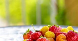 lamponi gialli bio- con le fragole rosse sulla tavola di estate Fine in su immagine stock libera da diritti