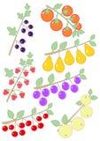 Lamponi, ribes nero, pomodori, prugne, mele, ciliege e pere Fotografia Stock