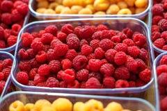 Lamponi rossi e gialli in scatole, concetto sano dell'alimento fotografia stock libera da diritti