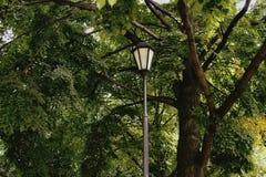 lampowej ulicznej drzewnej natury zielony kolor Zdjęcie Royalty Free