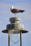 Lamppost with bird. Bird on a lamppost with sunlight and blue sky Royalty Free Stock Photography