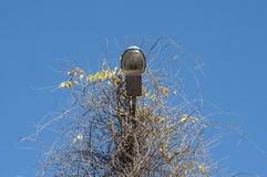 Lamppost covered branches Stock Photo
