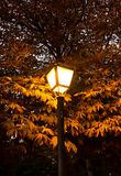 Lamppost at dusk in the Parque del Retiro in Madrid illuminating the autumn leaves of the trees stock photography