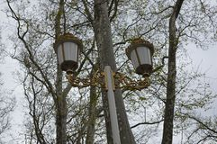 Lamppost with golden details. Photo of lamppost with golden details and naked trees in background stock photos