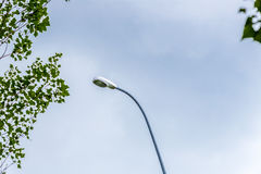 Lamppost and green trees Stock Photos