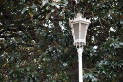 Lamppost. In front of a bush Royalty Free Stock Images