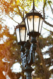 Lamppost. Old fashioned lamppost against a tree royalty free stock photo