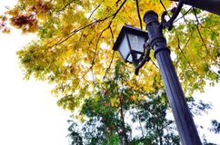 Lamppost under tree Stock Images