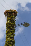 Lamppost wrapped in ivy Stock Image