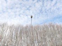 Lamppost wydźwignięcie nad drzewa obrazy stock