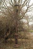 Lamppost Zakrywający Porosłymi roślinami Obrazy Royalty Free