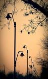 lampposts Foto de archivo libre de regalías