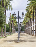 Lampposts with palm trees. Avenue lampposts, palm trees surrounded by vertical Royalty Free Stock Photos
