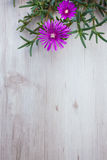 Lampranthus (Ice Plant) flowers on wood background Royalty Free Stock Images