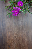 Lampranthus (Ice Plant) flowers on wood background Royalty Free Stock Photos