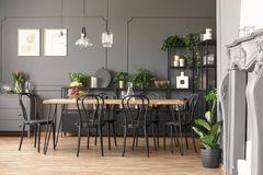 Lamps above wooden table and black chairs in grey dining room in. Terior with plants. Real photo concept stock images