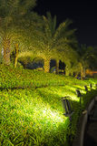Lamps Illuminated Plants and Garden Royalty Free Stock Image