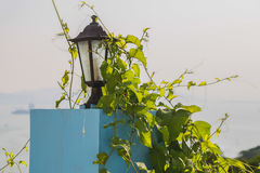 The lamps and lanterns of the crawling plants Royalty Free Stock Photo