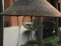 lampshade Royaltyfri Foto