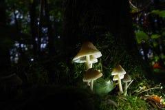 lampshade Fotografering för Bildbyråer