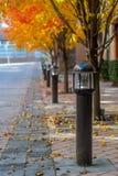 Lampstolpar fodrar en trottoar med nedgånglövverk Royaltyfri Fotografi