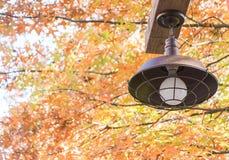 Lampstolpe, ljusa Pole Royaltyfri Foto